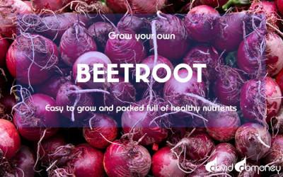 GYO Beetroot