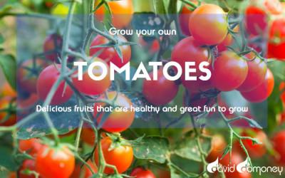 GYO Tomatoes