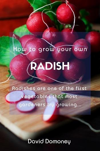 GYO Radish