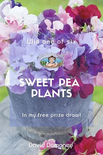 Win Sweet Peas